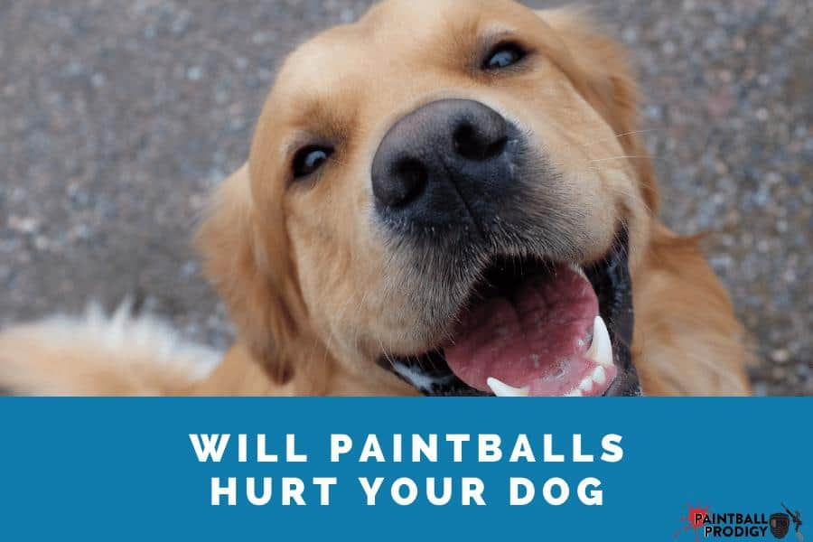 paintballs will hurt your dog